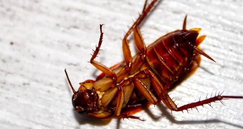 Roach Control In Melbourne FL