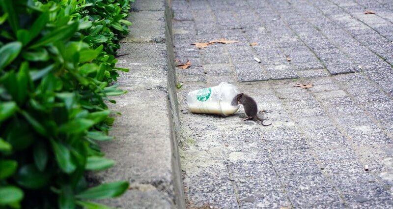 Rodent Control In Melbourne FL