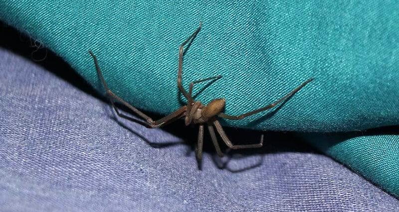 spider control in Melbourne FL